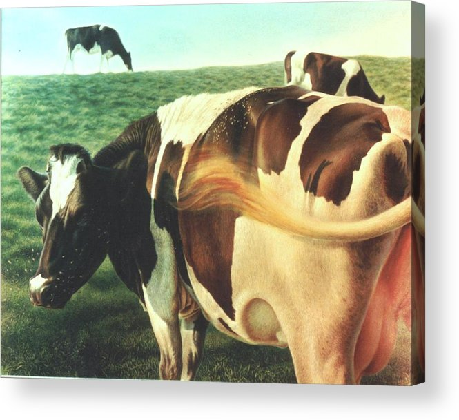 Cows Acrylic Print featuring the painting Cows 2 by Hans Droog