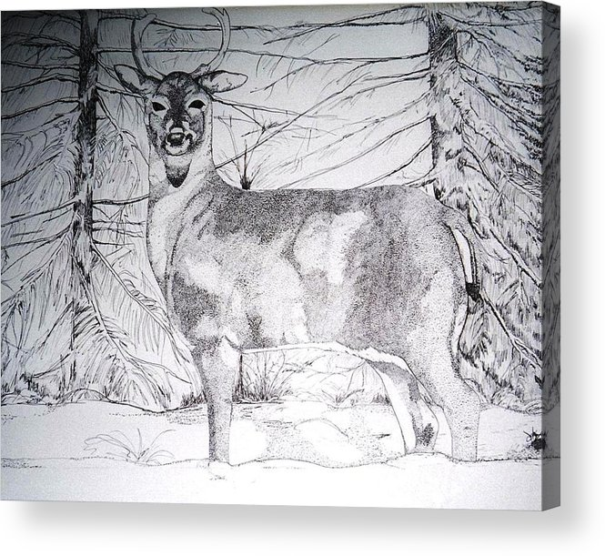 Whitetail Acrylic Print featuring the drawing Deep Snow by Debra Sandstrom