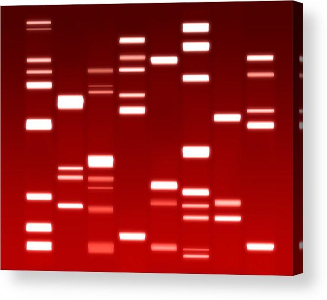 Dna Acrylic Print featuring the digital art Dna Red by Michael Tompsett