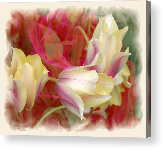 Floral Acrylic Print featuring the photograph Dutch Treat by Chuck Brittenham