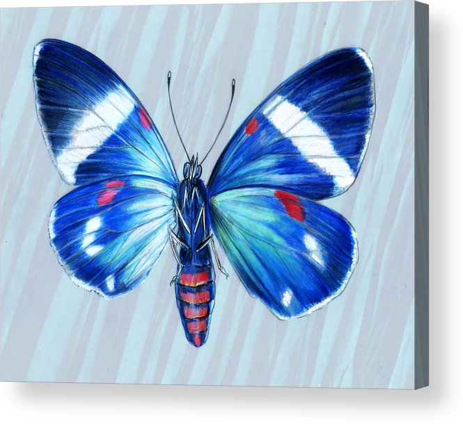 Moths Acrylic Print featuring the painting Electric Blue Moth by Mindy Lighthipe