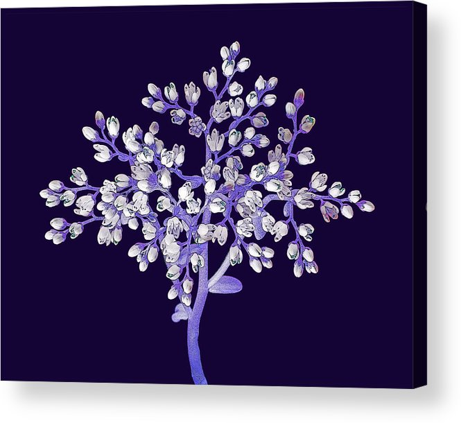 Flower Acrylic Print featuring the photograph Flower Tree by Digital Crafts