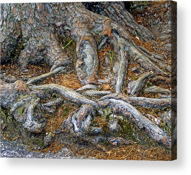 Tree Acrylic Print featuring the photograph Foot Of The Tree by Lynda Lehmann