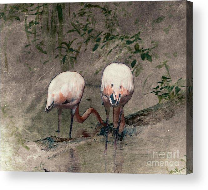 Arne J Hansen Acrylic Print featuring the photograph Gleaners by Arne Hansen