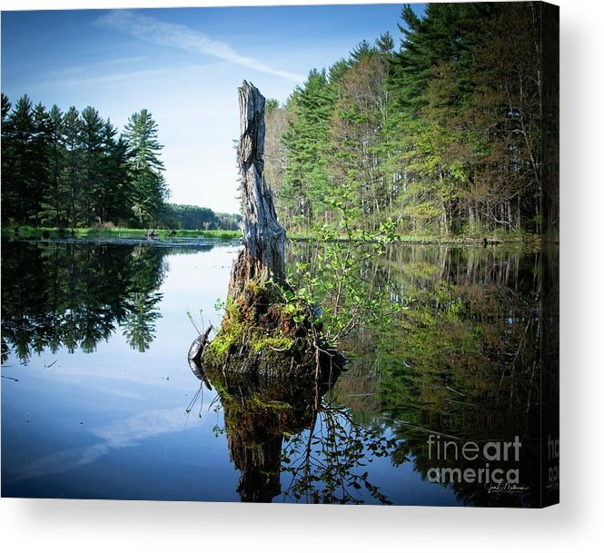 Stump Acrylic Print featuring the photograph God's Beauty - Nature's Bouquet 16 by Jan Mulherin