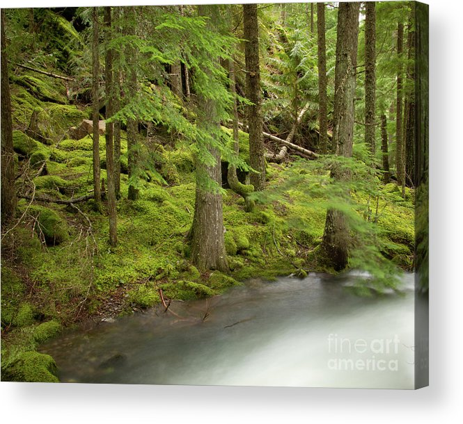 Beauty Creek Acrylic Print featuring the photograph Green Eden by Idaho Scenic Images Linda Lantzy