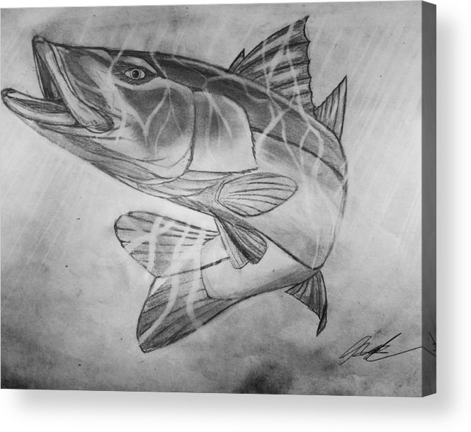 Snook Acrylic Print featuring the drawing Hand Drawn Snook by Nicholas James