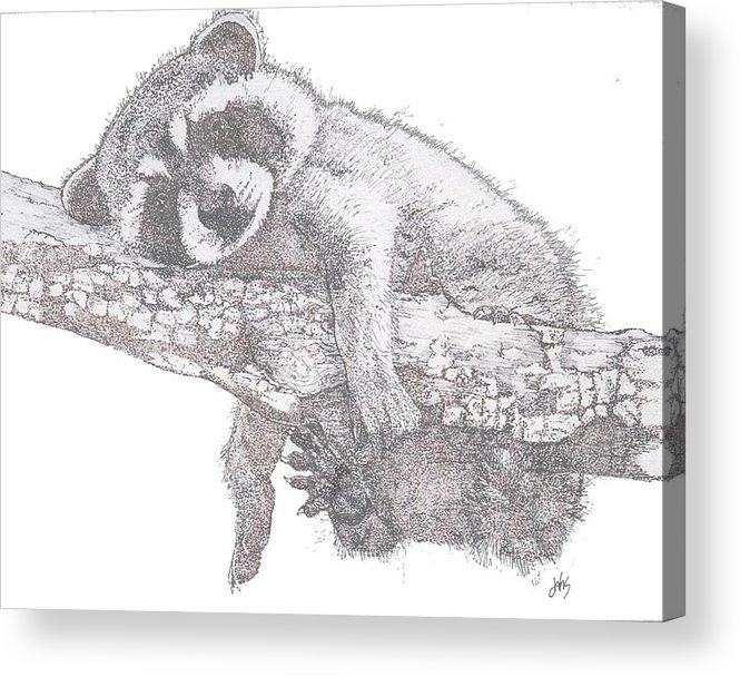 Raccoon Acrylic Print featuring the painting Hanging Out by Debra Sandstrom