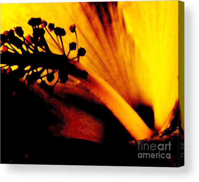 Flower Acrylic Print featuring the photograph Heat by Linda Shafer