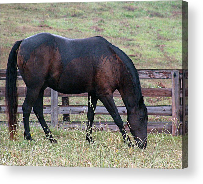 Horse In A Pasture Acrylic Print featuring the photograph Horse In A Pasture by Debra   Vatalaro