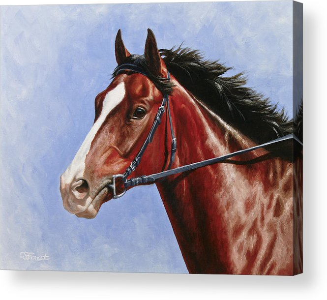 Horse Acrylic Print featuring the painting Horse Painting - Determination by Crista Forest