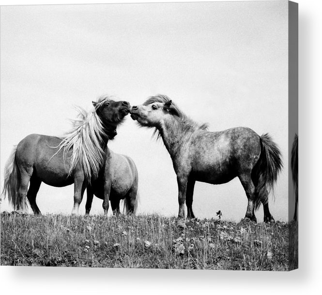 Acrylic Print featuring the photograph Horses 7 by Stephen Harris