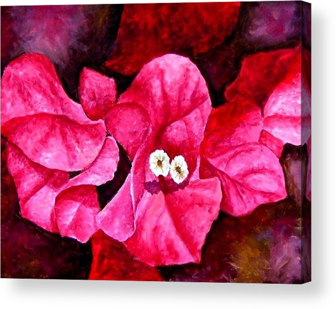 Oil Acrylic Print featuring the painting Hot Pink Bougainvillea by Darla Brock