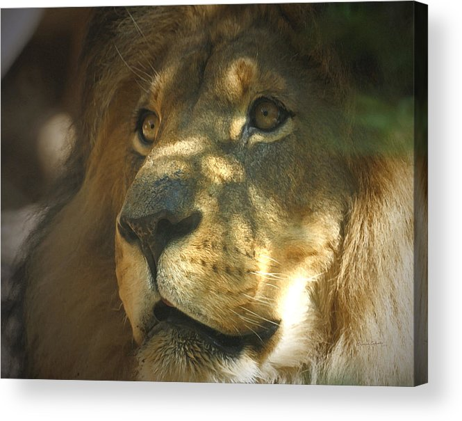 Lion Acrylic Print featuring the photograph I Want Some by Ernie Echols