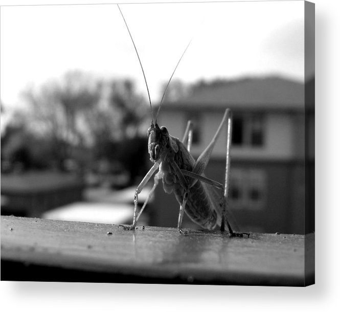 Photograph Acrylic Print featuring the photograph Jumper by Lindsey Orlando