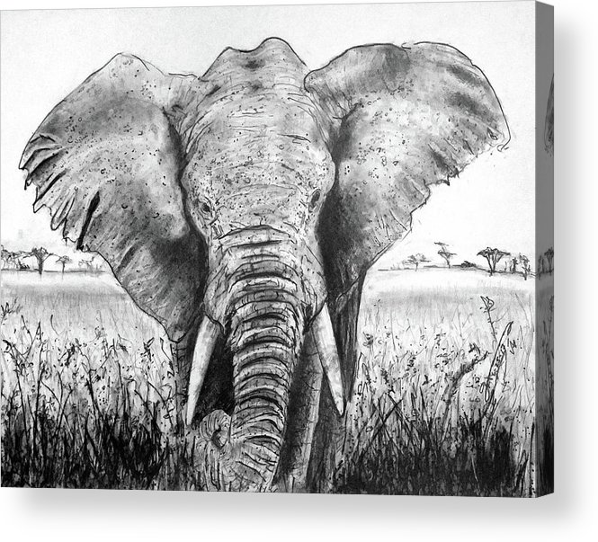 My Friend The Elephant Ii Acrylic Print featuring the drawing My Friend The Elephant II by Jose A Gonzalez Jr