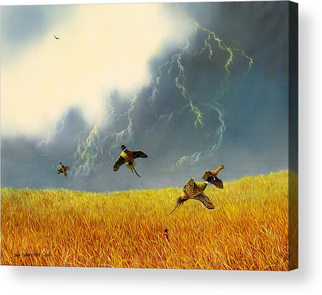 Pheasants Acrylic Print featuring the painting Pheasants On The Rise by Don Griffiths