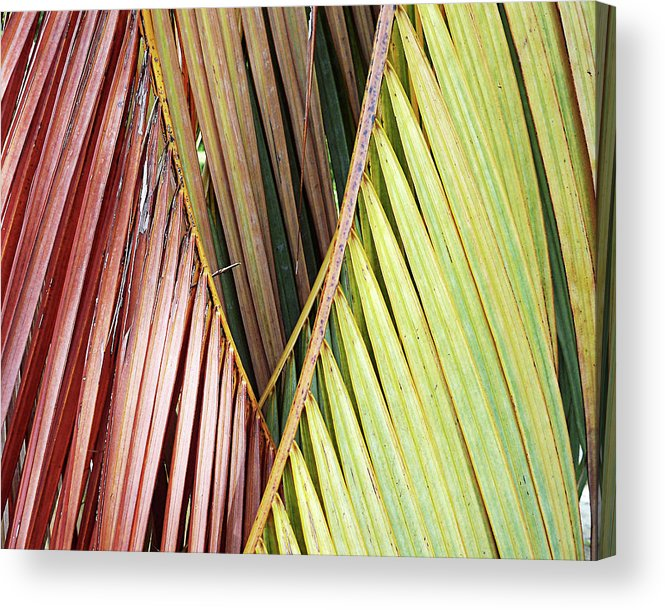 Florida Acrylic Print featuring the photograph Rainbow Of Palms Gp by Chris Andruskiewicz