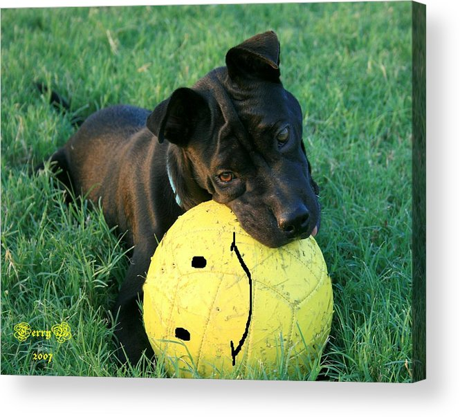 Dog Acrylic Print featuring the photograph Raising Raisin by Terry Burgess