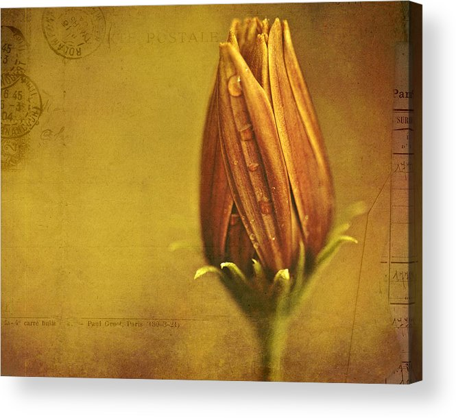 Floral Art Acrylic Print featuring the photograph Recollection by Bonnie Bruno