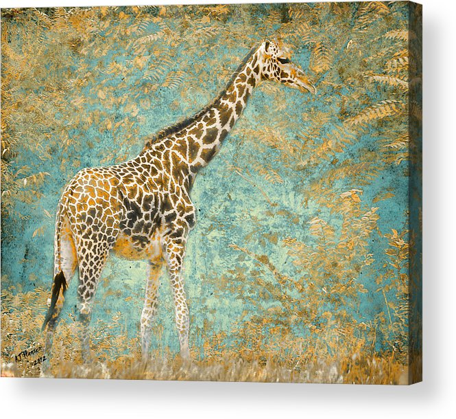 Pittsburgh Zoo Acrylic Print featuring the photograph Reticulated by Arne Hansen