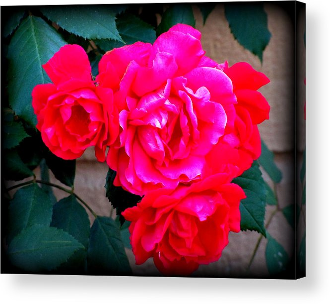 Lisa Jayne Konopka Acrylic Print featuring the photograph Roses On Stucco by Lisa Jayne Konopka