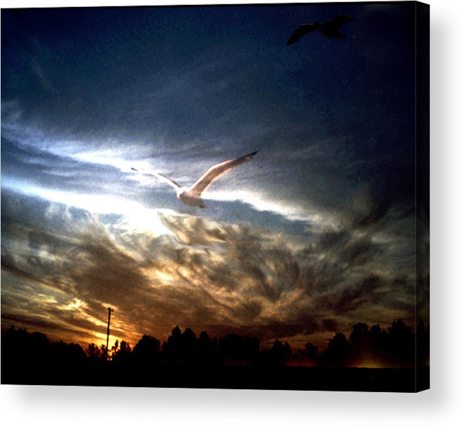 Gull Acrylic Print featuring the photograph Sea Gull At Night by Ralph Perdomo