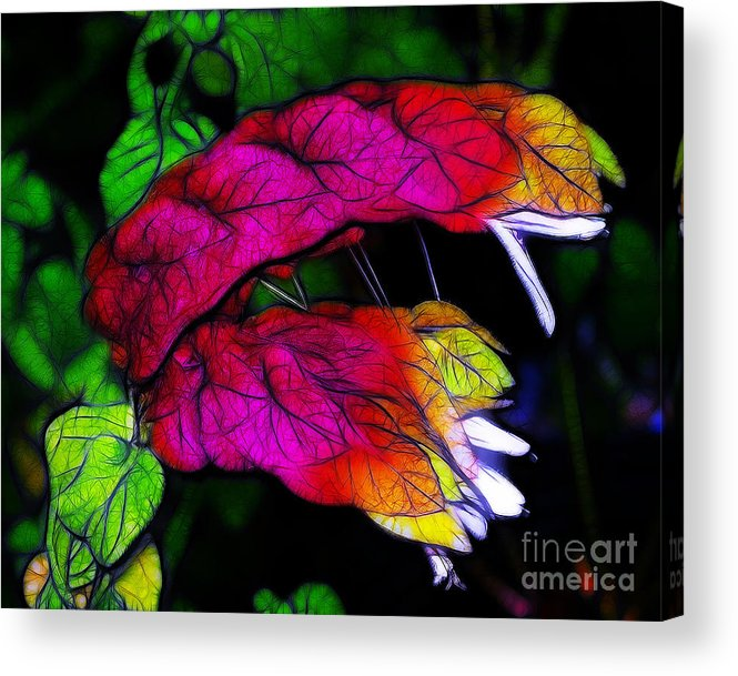 Pink Acrylic Print featuring the photograph Shrimp Plant by Judi Bagwell