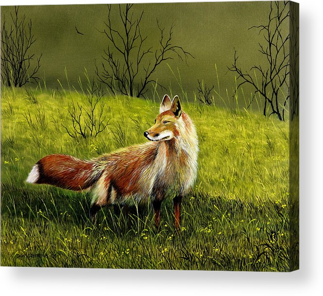 Wildlife Acrylic Print featuring the painting Sly Fox by Don Griffiths