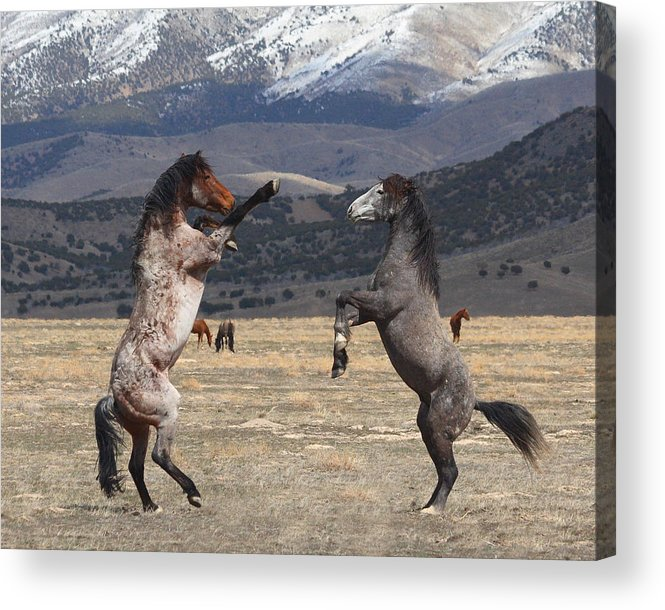 Equine Acrylic Print featuring the photograph Standing Tall by Gene Praag