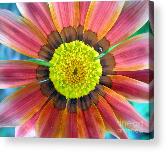 Photography Acrylic Print featuring the photograph Sunburst by Heather S Huston