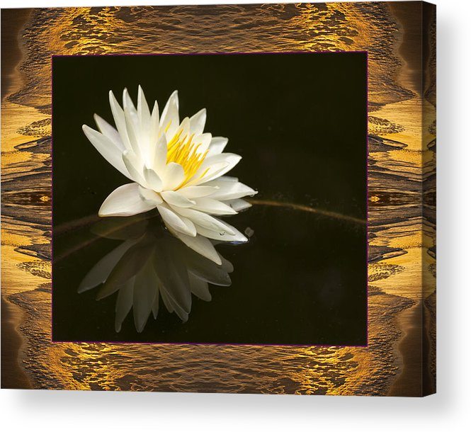 Nature Photos Acrylic Print featuring the photograph Sunset Lily by Bell And Todd