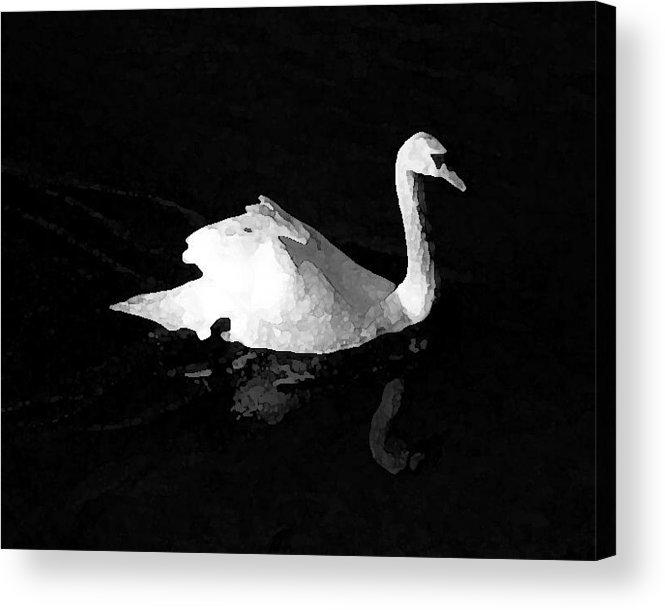 Swan Acrylic Print featuring the photograph Swan In Blackwater by John Bradburn