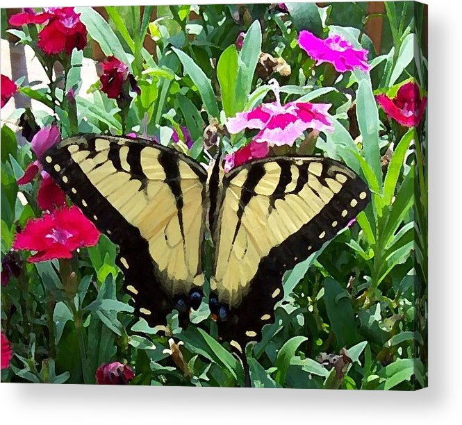 Swallowtail Acrylic Print featuring the photograph Symmetry by Sandi OReilly