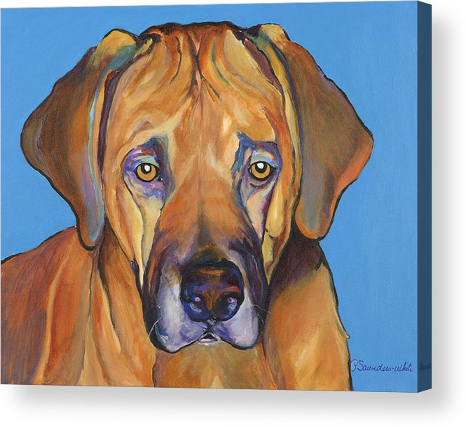 Rhodesian Ridgeback Dog Ridgeback African Colorful Orange Gold Yellow Red Acrylic Print featuring the painting Talen by Pat Saunders-White