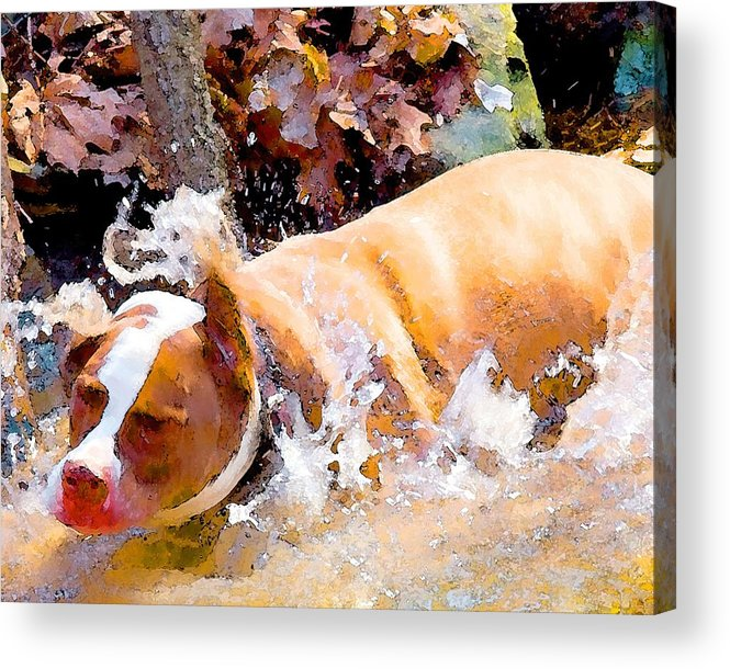 Dpg Acrylic Print featuring the digital art Waterdog by John Toxey