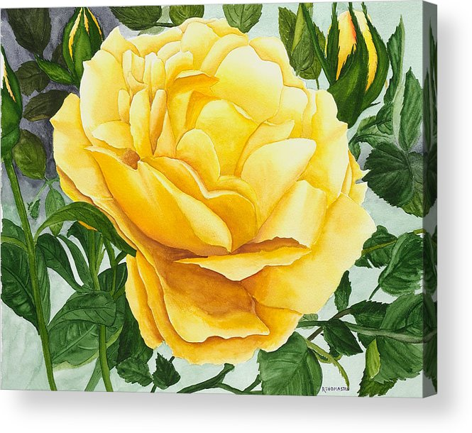 Yellow Rose Watercolor Painting Acrylic Print featuring the painting Yellow Rose by Robert Thomaston