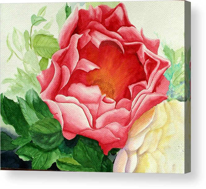 Red Rose Watercolor Painting Acrylic Print featuring the painting Yes It Is A Rose by Robert Thomaston