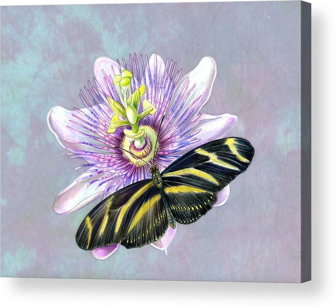 Moths Acrylic Print featuring the painting Zebra Longwing by Mindy Lighthipe