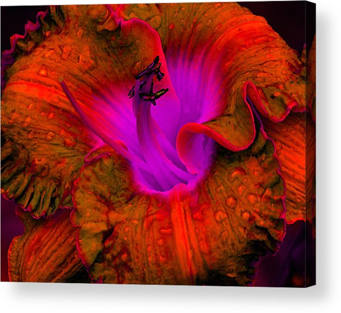 Flower Acrylic Print featuring the photograph Day Glow by Cindy Throgmorton