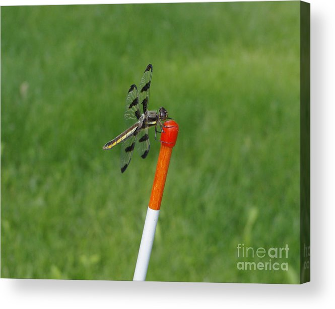 Green Acrylic Print featuring the photograph Dragon Fly by Alice Markham
