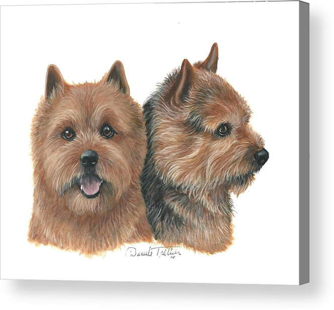 SCOTTISH TERRIER TWO DOGS HEAD STUDY DOG PRINT MOUNTED READY TO FRAME