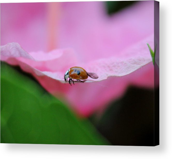 Edge Acrylic Print featuring the photograph On The Edge by Trent Mallett