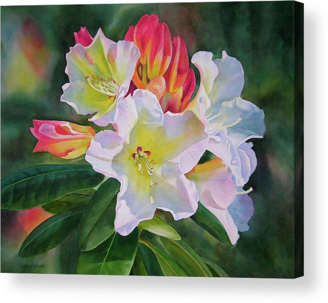 Watercolor Acrylic Print featuring the painting Rhododendron With Red Buds by Sharon Freeman