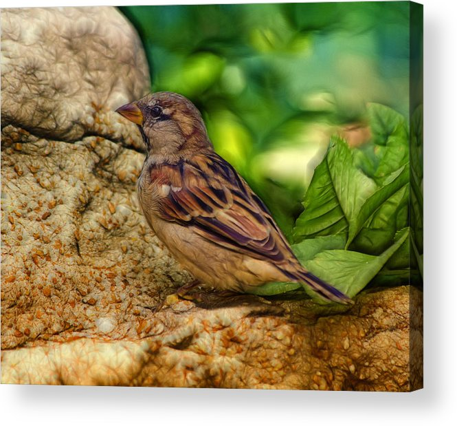 Bird Acrylic Print featuring the photograph Baby Birdie by Linda Tiepelman