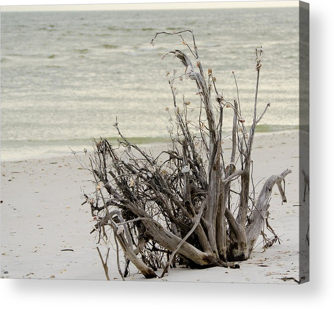 Lovers Key Acrylic Print featuring the photograph Lovers Key Beach by Mike Rivera