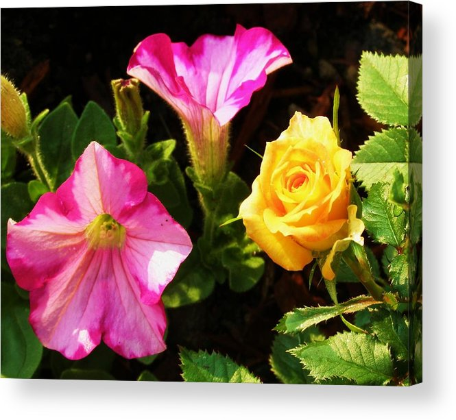 Petunias Acrylic Print featuring the photograph Petunias With A Rosy Neighbor by Cathy Sosnowski