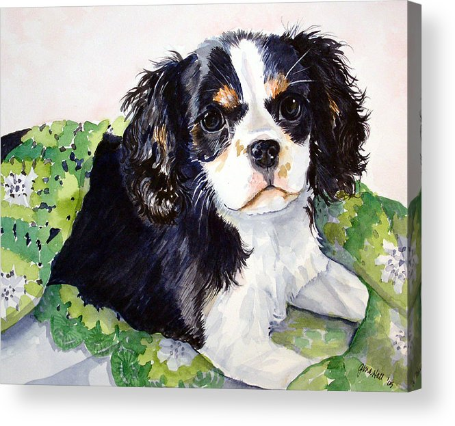 Canine Acrylic Print featuring the painting Casey by Gina Hall