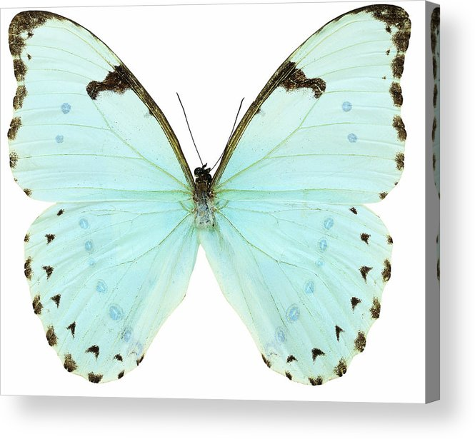 Horizontal Acrylic Print featuring the photograph Close-up Of A White Butterfly by Stockbyte