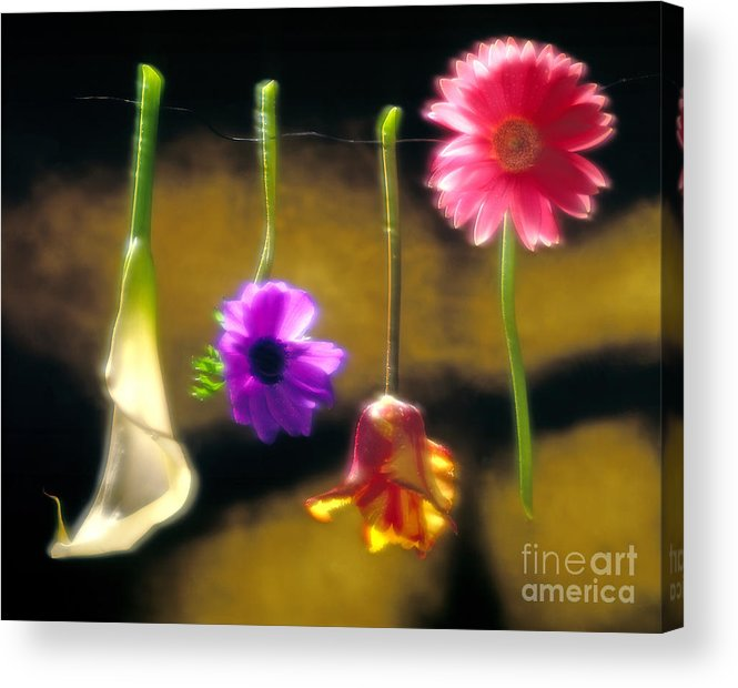 Tulip Acrylic Print featuring the photograph Hanging Flowers by Tony Cordoza